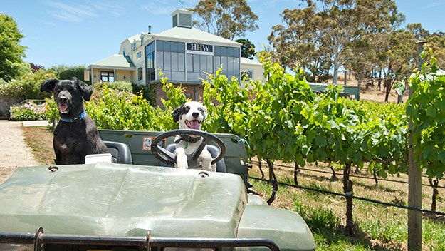 The dogs of Hahndorf Hill Winery, just one of the boutique businesses that make the Adelaide Hills so special.